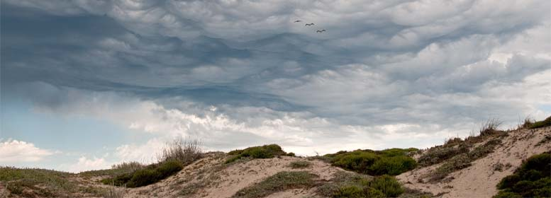 Stormy sky over beach with three seagulls flying
